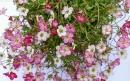 Maisons fleuries