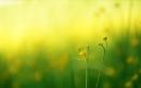 Fleur assomption